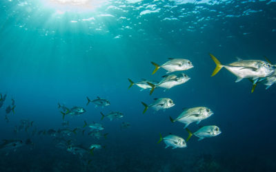 Healthy Boundaries For Marine Life